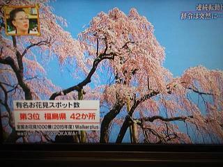 20150416福島の桜(その1)