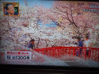 20150416福島の桜(その2)