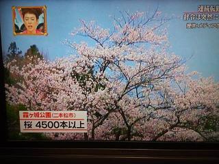 20150416福島の桜(その4)