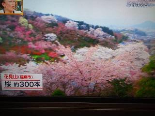 20150416福島の桜(その5)