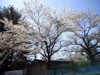 20150418とら食堂(その2)