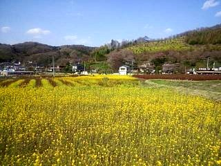 20150418花見山(その2)