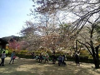 20150418花見山(その6)