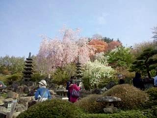 20150418花見山(その7)