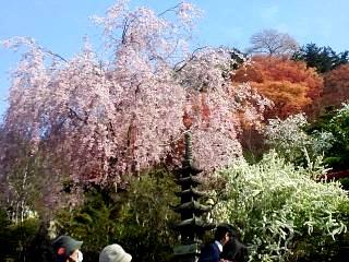 20150418花見山(その8)