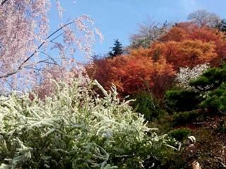 20150418花見山(その9)