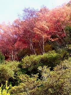 20150418花見山(その10)