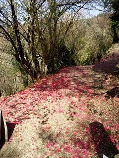 20150418花見山(その13)