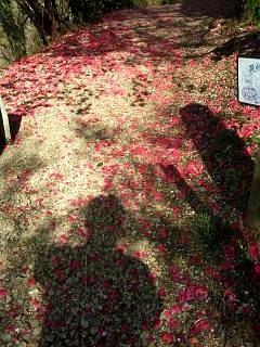 20150418花見山(その15)