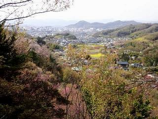 20150418花見山(その16)
