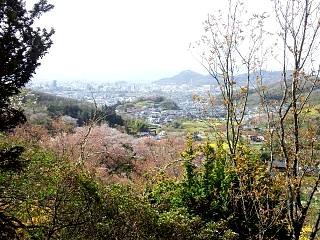 20150418花見山(その17)