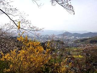20150418花見山(その18)