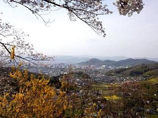 20150418花見山(その19)