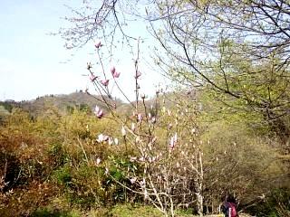 20150418花見山(その22)