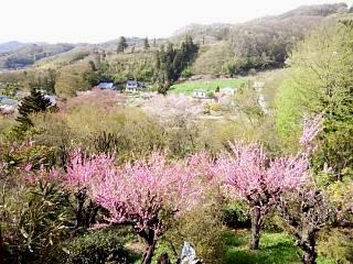 20150418花見山(その24)