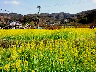 20150418花見山(その32)