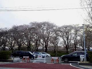 20150418花見山(その33)