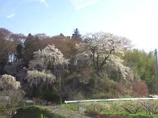 20150419三春滝桜(その1)