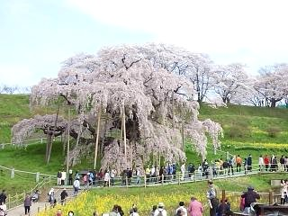 20150419三春滝桜(その2)