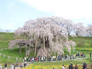 20150419三春滝桜(その3)