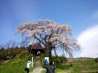 20150419不動桜(その4)