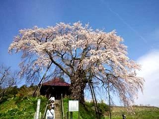 20150419不動桜(その6)