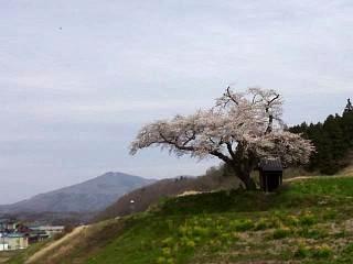 20150419小沢の桜(その3)