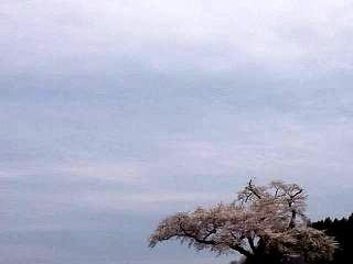 20150419小沢の桜(その4)