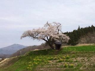 20150419小沢の桜(その6)