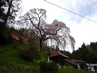 20150419妙典桜(その3)