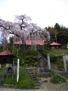 20150419妙典桜(その5)