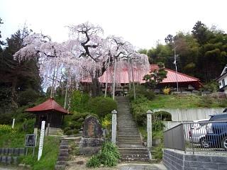 20150419妙典桜(その6)
