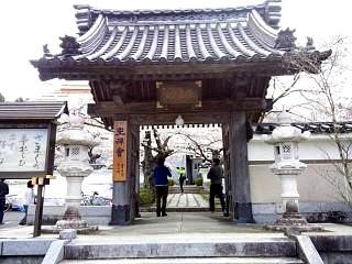 20150419福聚寺の桜(その2)
