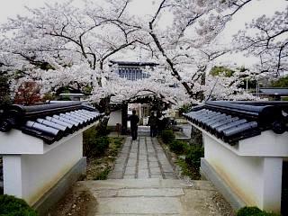 20150419福聚寺の桜(その9)