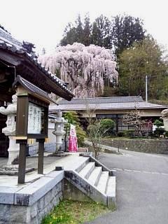 20150419福聚寺の桜(その12)