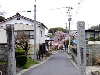 20150419福聚寺の桜(その13)
