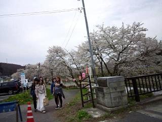 20150419夏井の千本桜1(その1)
