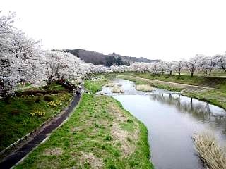 20150419夏井の千本桜1(その3)