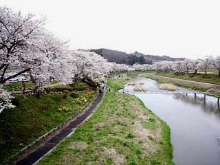 20150419夏井の千本桜1(その4)