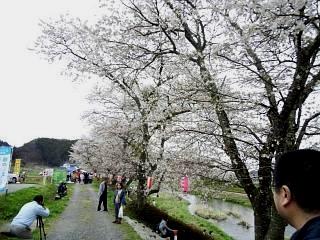 20150419夏井の千本桜1(その5)