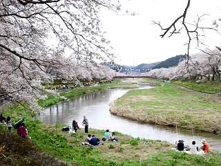20150419夏井の千本桜1(その6)