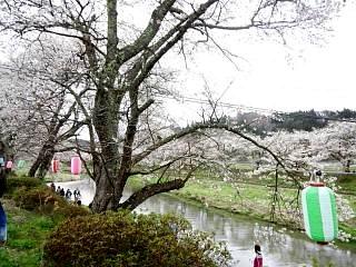 20150419夏井の千本桜1(その7)
