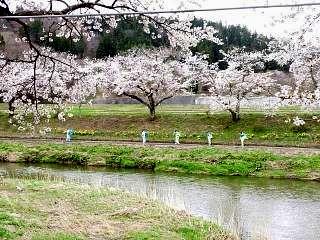 20150419夏井の千本桜1(その10)