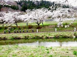 20150419夏井の千本桜1(その11)