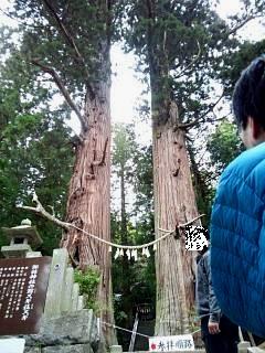 20150419夏井の千本桜1(その34)