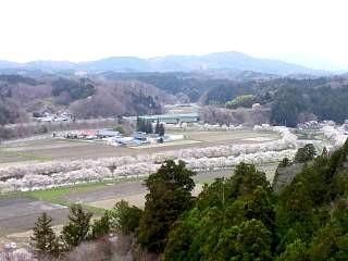 20150419夏井千本桜2(その3)