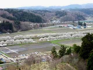 20150419夏井千本桜2(その9)