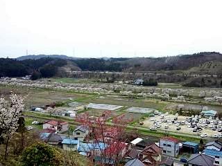 20150419夏井千本桜2(その11)