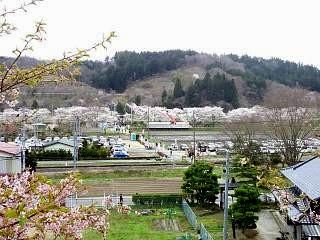 20150419夏井千本桜2(その16)