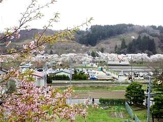20150419夏井千本桜2(その17)